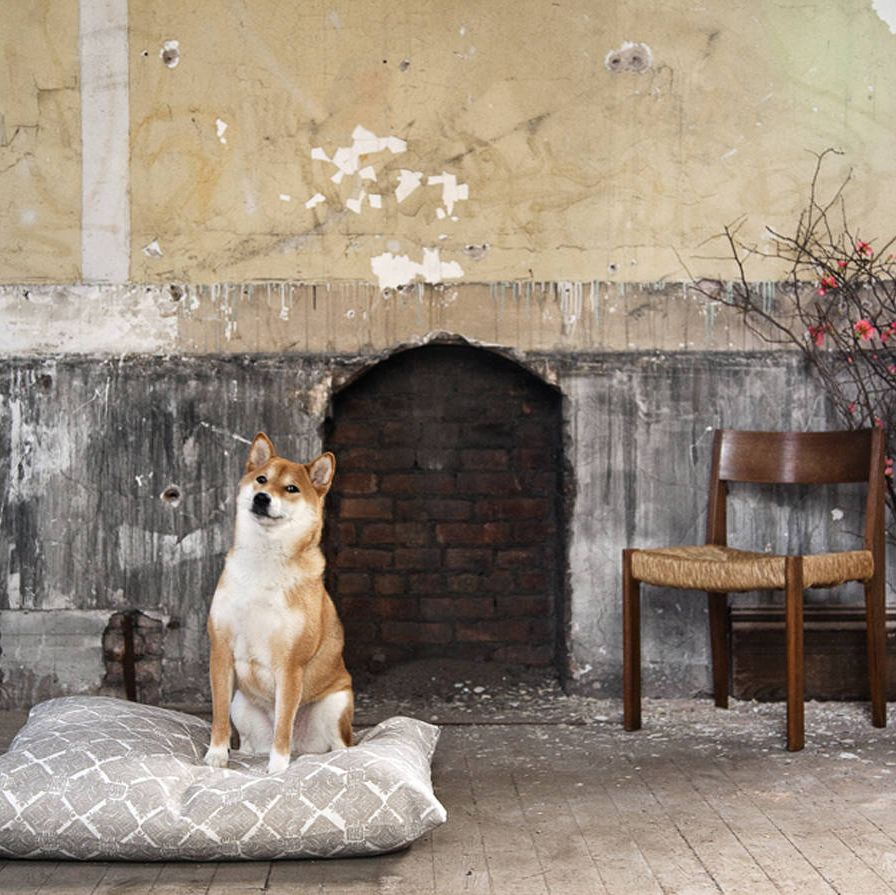 """ShinjiInterior and textile designer Zak Profera named his company Zak + Fox after his five-year-old Shiba-Inu and the notion of """"a boy and his dog transversing the globe."""" Likes: Belly rubs, apples, and chewing on deer antlers.Natural Habitat: Back seat of the car because he knows he's going on an adventure somewhere."""