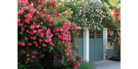 """Avoid the temptation to snap up every variety that catches your eye, say Joyce Nereaux Moore and her husband, Gerald Moore, who achieved this lavish look with just two types of climbing rose: 'William Baffin' and 'New Dawn.' """"You only need to plant a few kinds of things,"""" explains Gerald, """"but do it in big sweeps.""""via Country Living"""