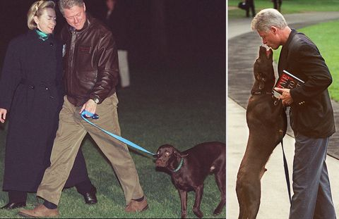 From left: US President Bill Clinton and First Lady Hilary Clinton with chocolate labrador retriever Buddy; President Bill Clinton is greeted by his Buddy as he arrives at the White House.