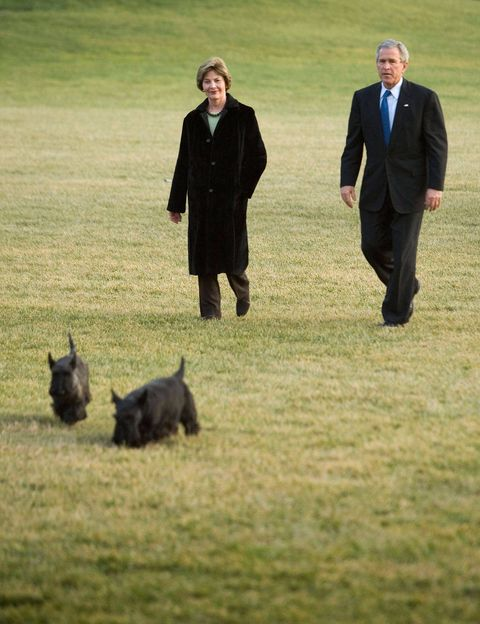 US President George W. Bush walks from Marine One to the White House with First Lady Laura Bush and family dogs Miss Beazley and Barney.