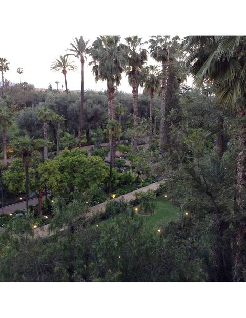 I took this photo from the balcony of my hotel room. I felt like I was in an exotic jungle- the scent of of jasmine and incense filled the air.