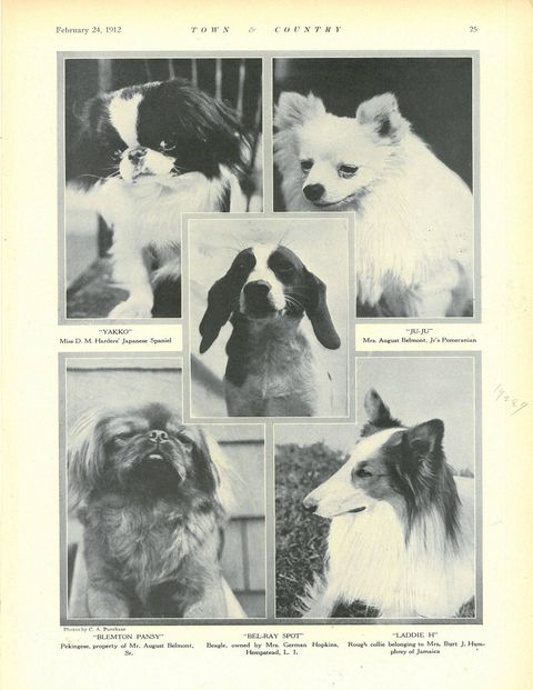 <p>The Westminster Kennel Club Show.</p>
