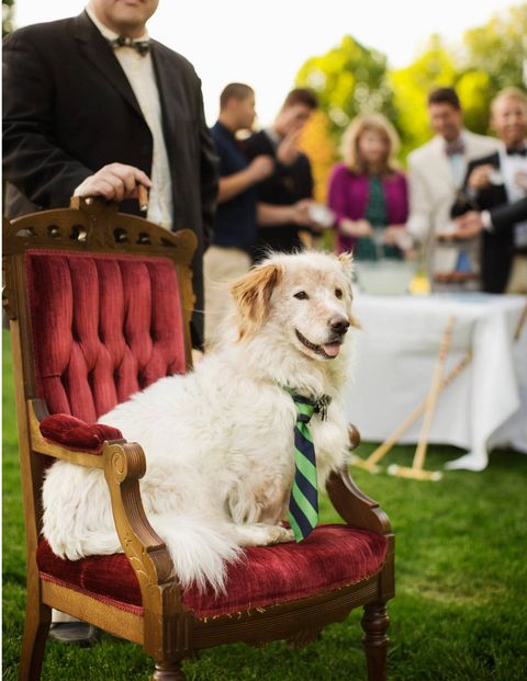 Human, Dog, Dog breed, Furniture, Carnivore, Chair, Sporting Group, Companion dog, Fur, Bag,