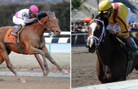 Human, Halter, Jockey, Bridle, Organism, Rein, Equestrian helmet, Horse supplies, Shoe, Horse tack,