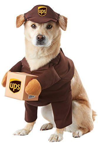 Tiny Dog Halloween Costumes.35 Best Dog Costumes For Halloween 2021 Cute Funny Halloween Costume Ideas For Puppies
