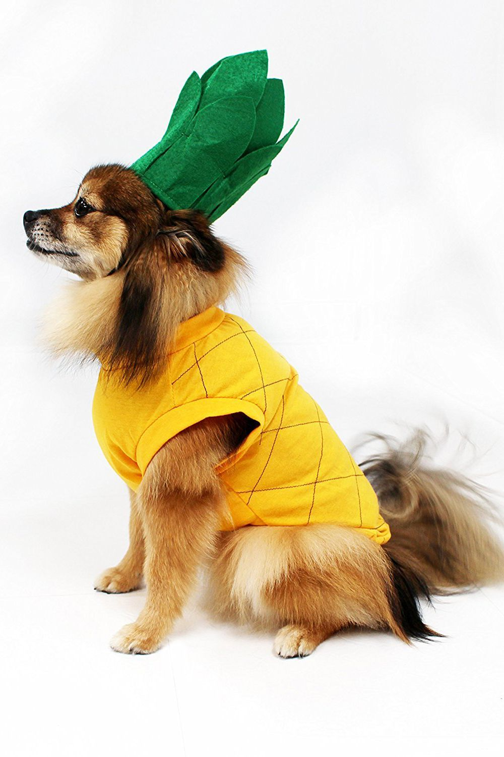 Details about  /Pet Halloween Dog Costumes