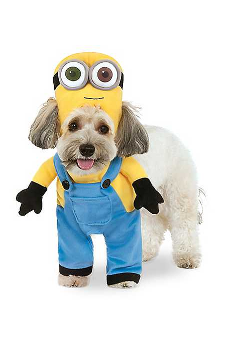 Cute Dog Halloween Costumes: Cute Ideas For Pet Costumes
