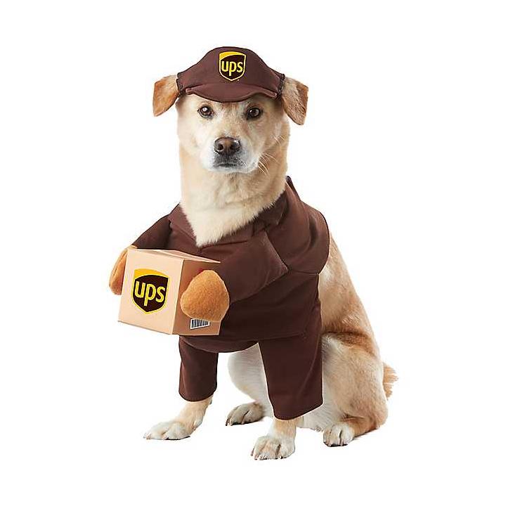 dog costume funny