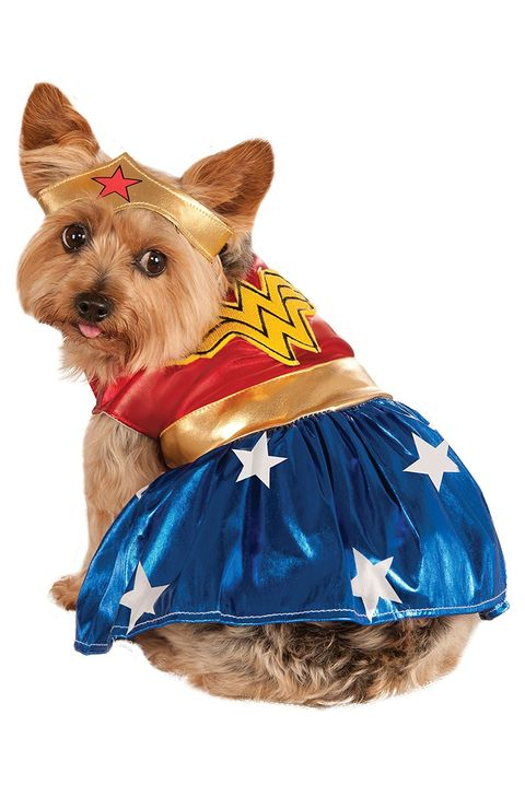28 funny dog halloween costumes cute ideas for pet costumes wonder woman dog costumes solutioingenieria Choice Image