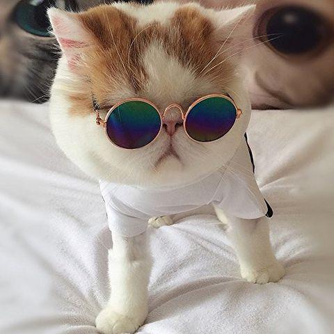 retro circular pet sunglasses