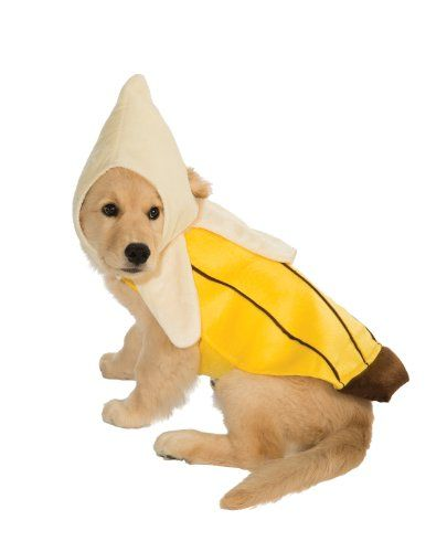 A BIG BANANA. Banana Costume  sc 1 st  Town u0026 Country Magazine & 10 Funny Dog Halloween Costumes in 2018 - Best Pet Costume Ideas