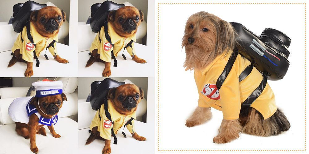 f5a73d6483a 35 Best Dog Costumes for Halloween 2018 - Cute Halloween Costumes for Dogs