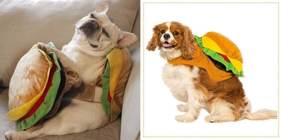 35 Best Dog Costumes For Halloween 2018 Cute Halloween Costumes