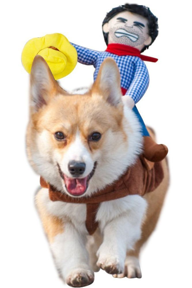 35 Best Dog Costumes For Halloween 2020 Cute Funny Halloween
