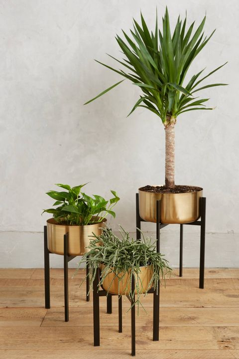 1 Rossum Metallic Plant Stand Anthropologie