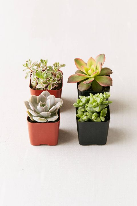 4 A Set Of Succulents