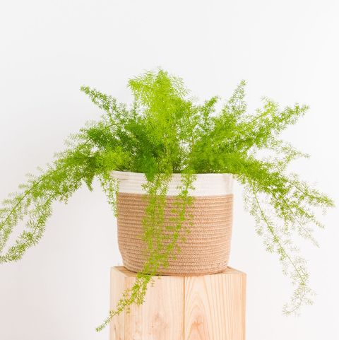 30 Easy Houseplants To Care For Indoor Plants