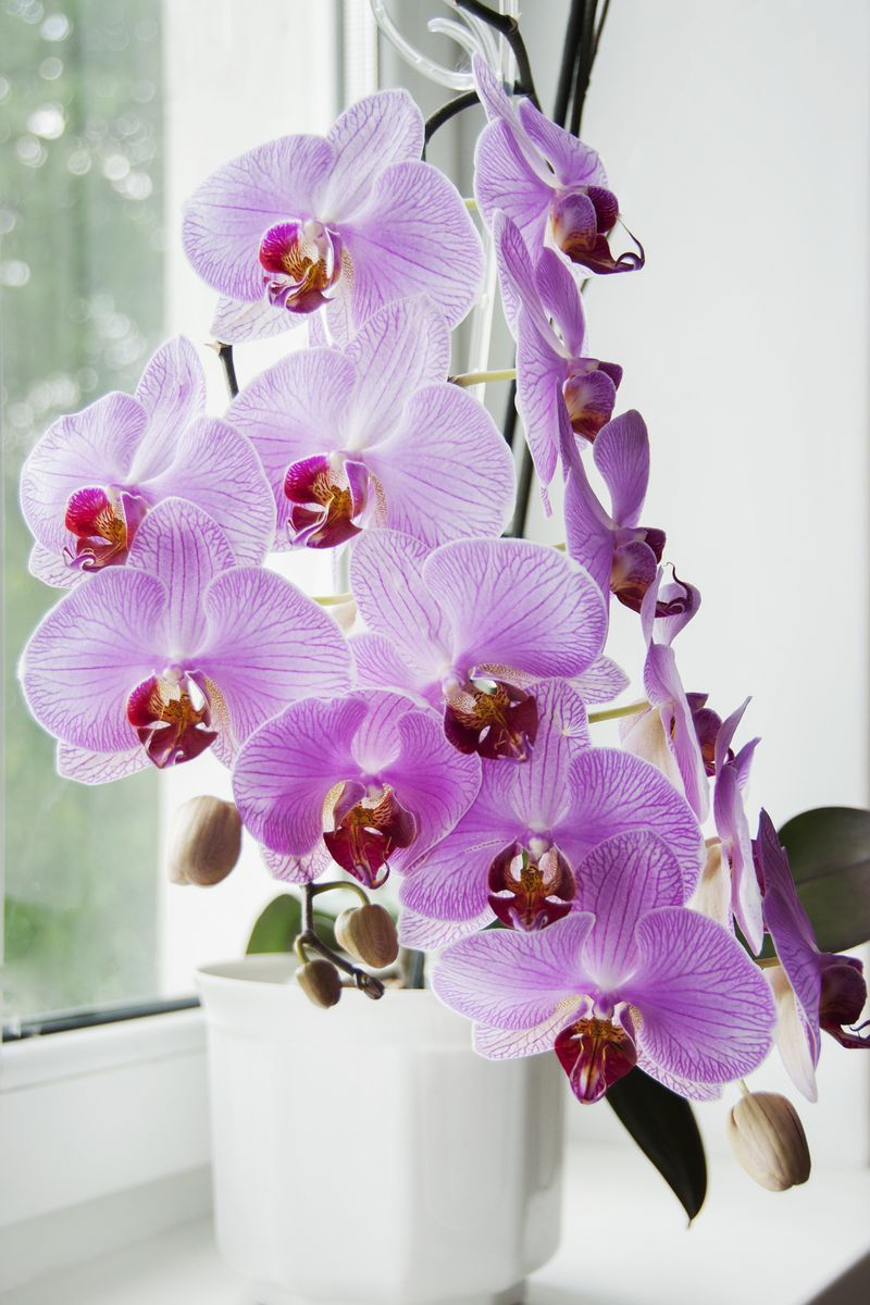 30 Easy Houseplants - Easy To Care For Indoor Plants Purple House Plant Name on purple wildflower names, purple leaf names, purple vegetables names, purple ground cover names, purple vine names, purple foliage plants names, purple orchid names, purple butterfly names, purple fish names, purple tree names, purple bromeliad names,