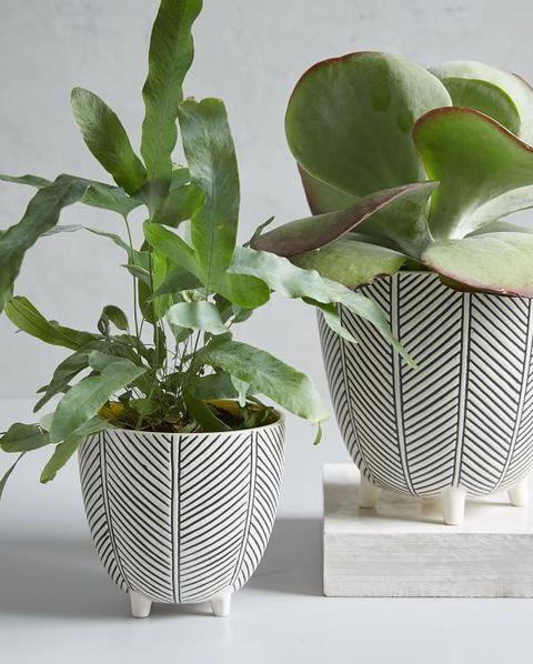20 Best Indoor Planters Stylish Indoor Plant Pots