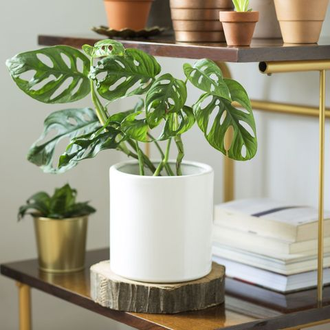 30 Easy Houseplants - Easy to Care For Indoor Plants