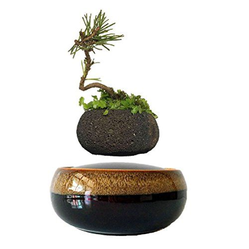 Best Levitating Planters You Can Buy Online How Levitating Planters Work