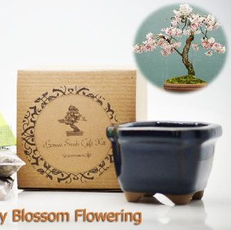 Amazon Is Selling A Diy Grow Your Own Cherry Blossom Bonsai Tree Kit For 13 Bonsai Tree Kit