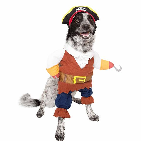 e37e8d95c 35 Funny Dog and Puppy Costumes for 2019 - Cute Pet Halloween ...