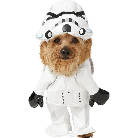 a983307e7cc 35 Funny Dog and Puppy Costumes for 2019 - Cute Pet Halloween ...