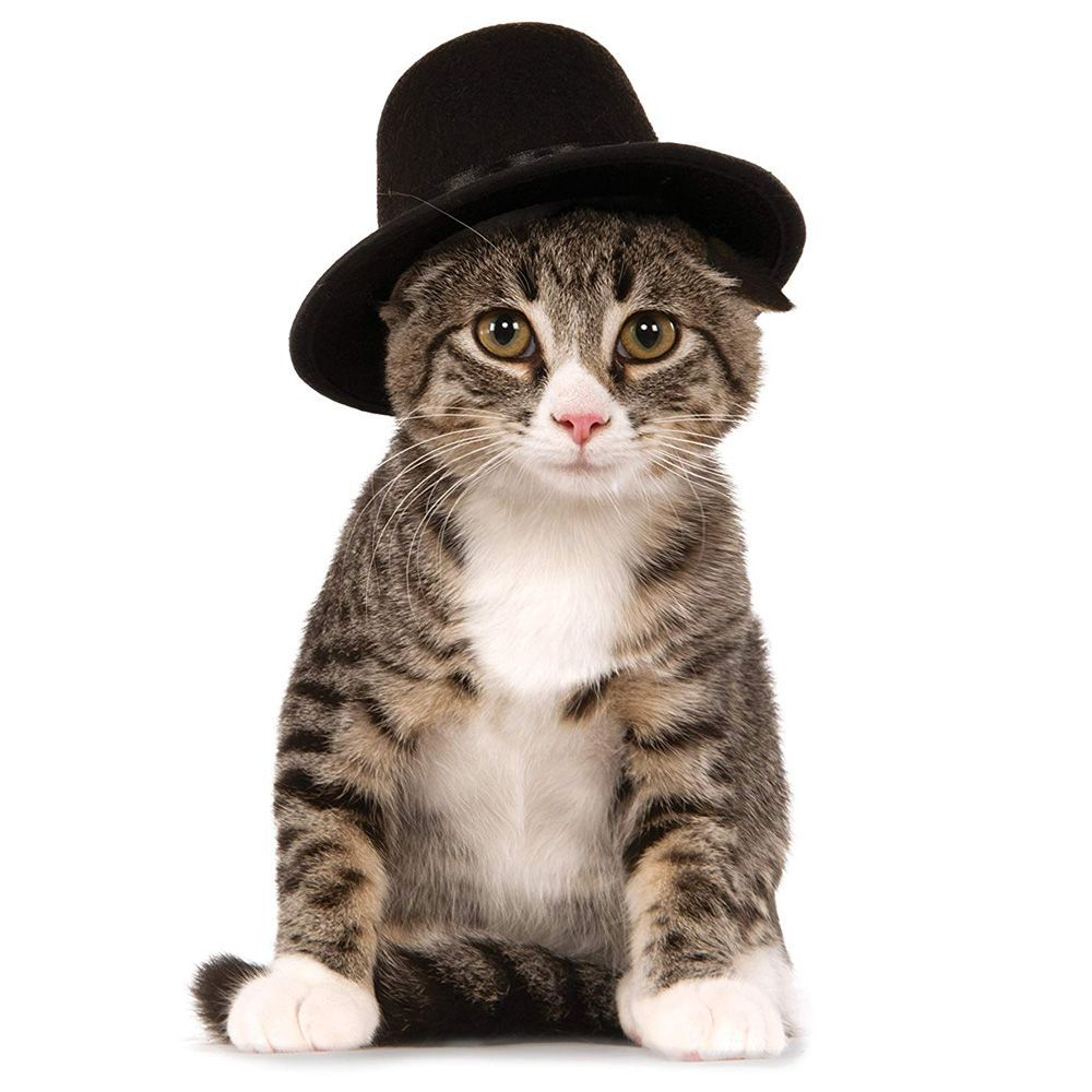 Dapper Cat Costume