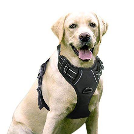 15 Best Dog Harnesses To Buy In 2020 Top Dog Walking Vests