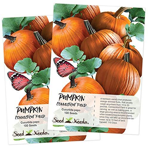 Planting Pumpkin Seeds How To Grow Pumpkins