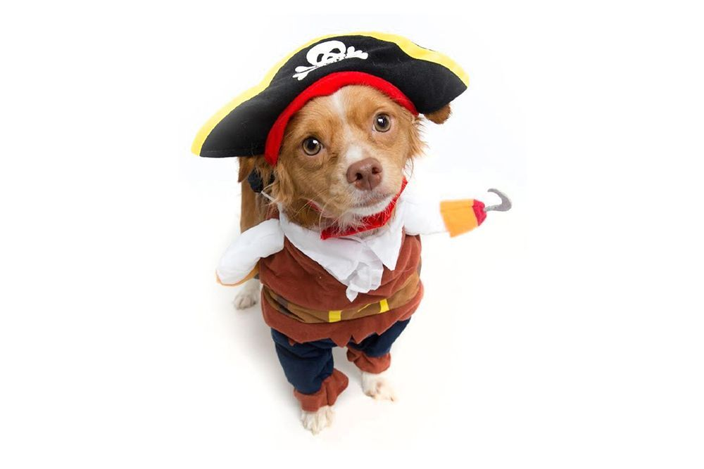 30 Best Dog Costumes for Halloween 2019 , Dog Costume Ideas