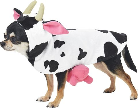 28 Best Costumes For Dogs