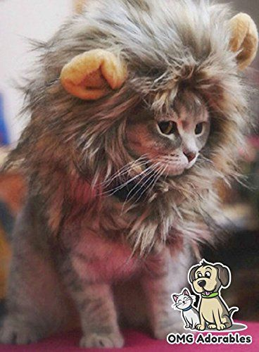 19 Best Halloween Costumes For Cats