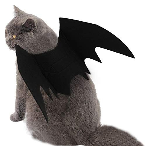 19 Best Costumes For Cats