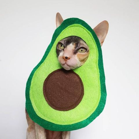 17 Best Halloween Costumes For Cats 2020 Best Cat Costumes