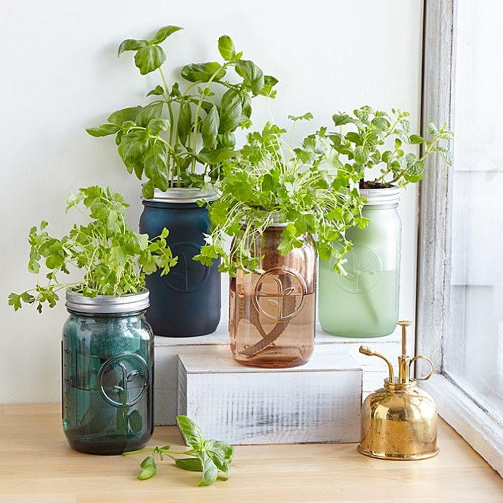 Mason Jar Indoor Herb Garden