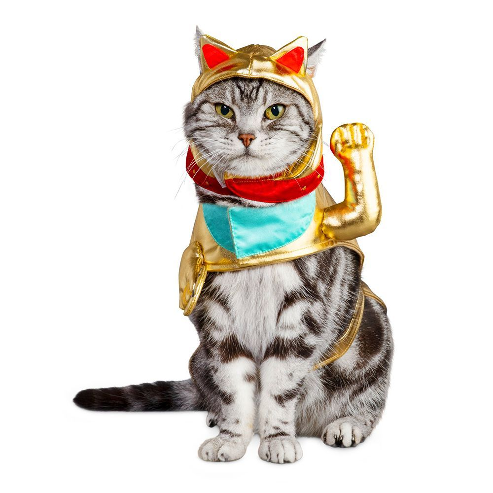 Lucky Cat Costume