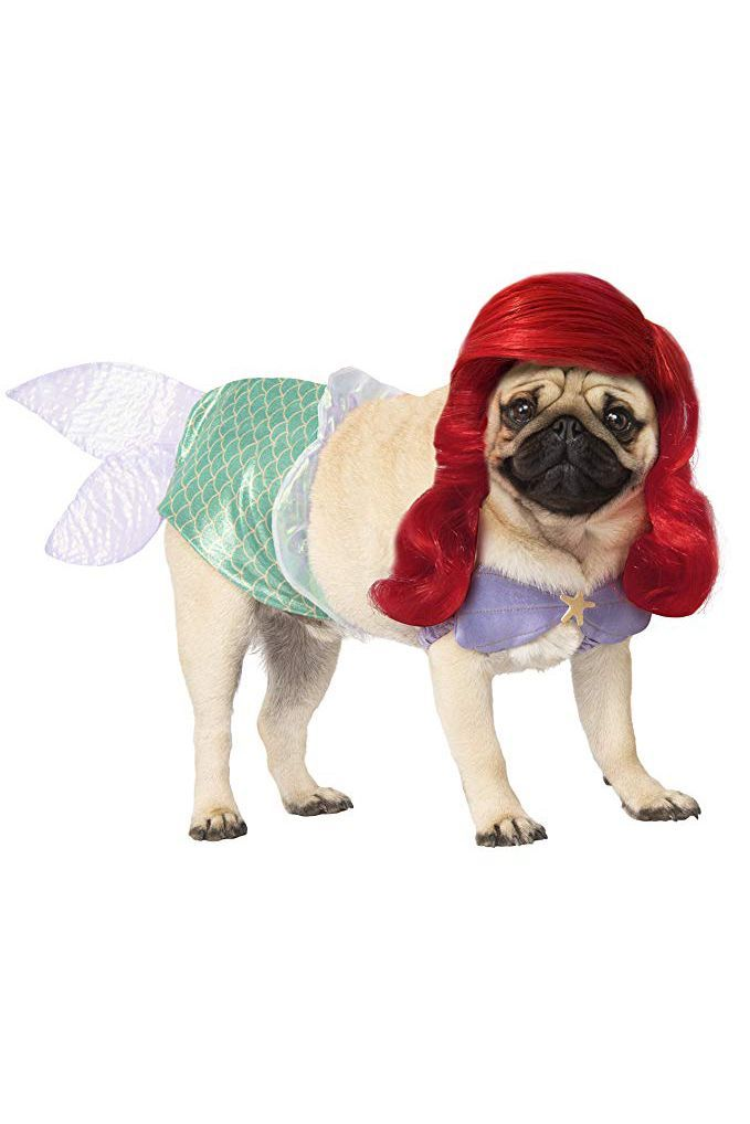50 Dog Halloween Costumes , Cute Ideas for Pet Costumes