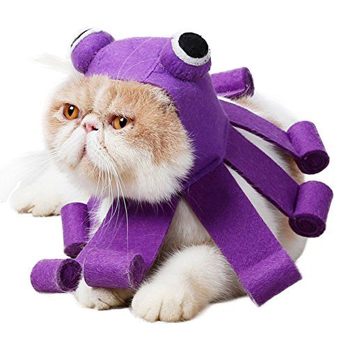 Pet Cat Halloween Costumes , Cute Ideas for Cat Costumes