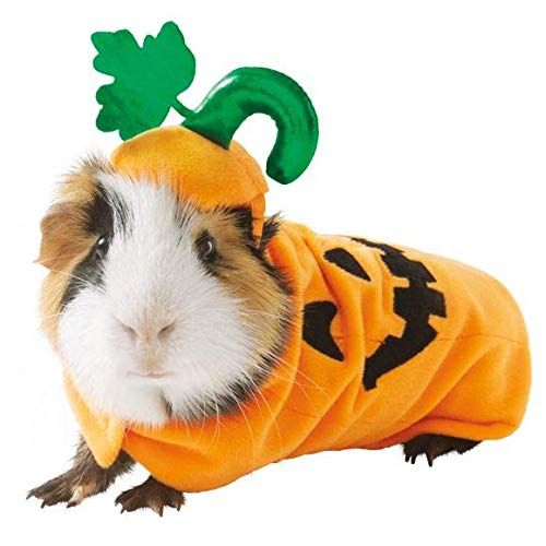 Guinea Pig Small Pet Shark Holiday Halloween Costume Clothes Cute Funny Gift