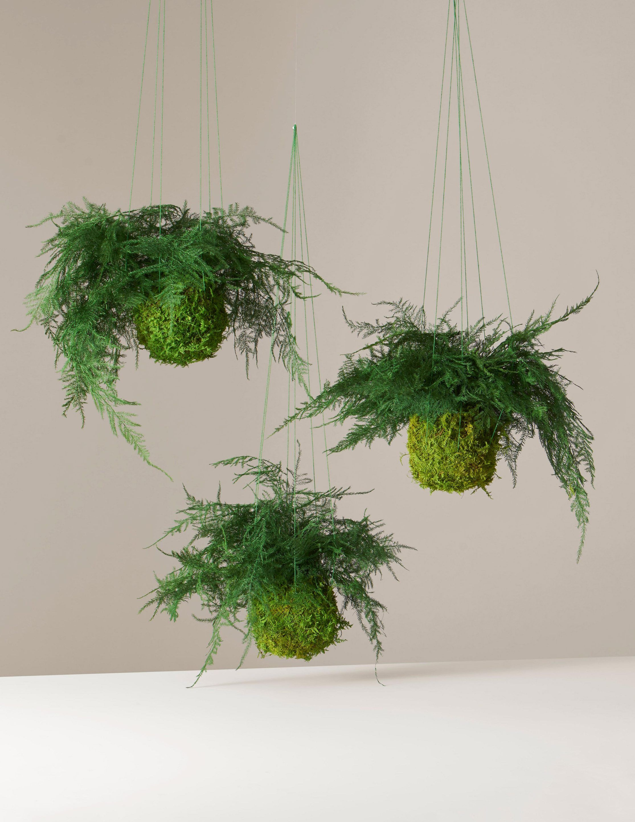 10 Best Hanging Plants Plants For Hanging Planters