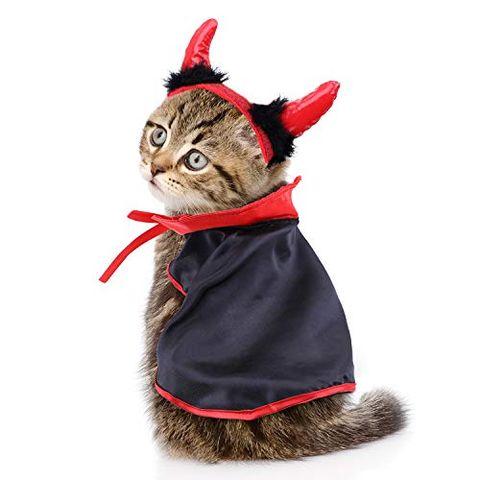 Pet Cat Halloween Costumes Cute Ideas For Cat Costumes