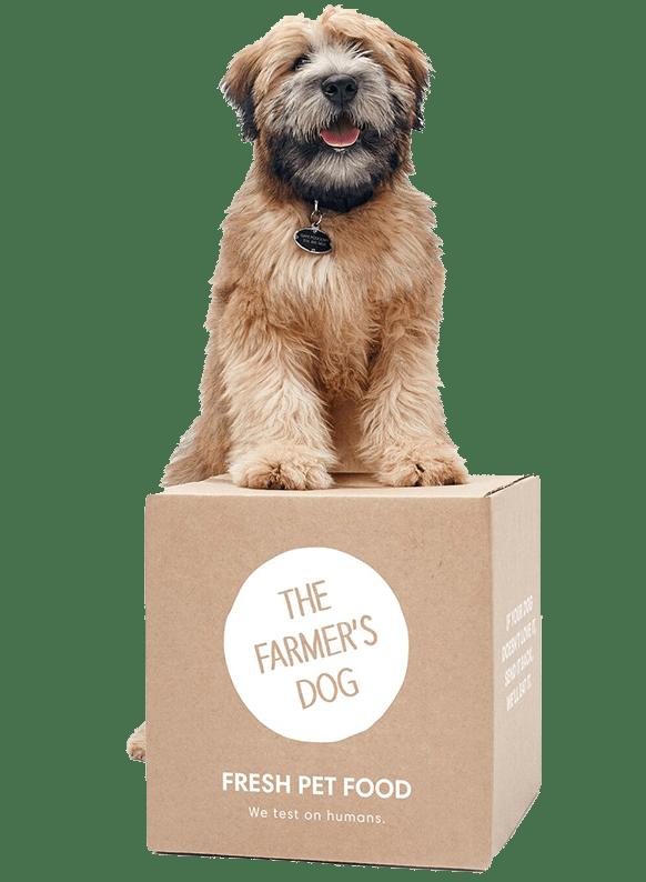 27 Gifts For Dog Lovers Best Gifts For Dog Lovers 2019