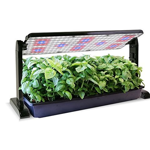 The 15 Best Grow Lights For Your Plants, Outdoor Grow Lights