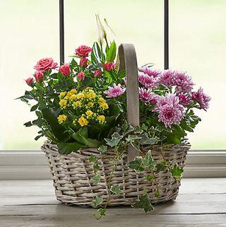 Large Spring Flowering Basket