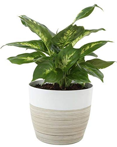 15 Of The Best Bedroom Plants That Purify The Air Easy Indoor Plant Ideas