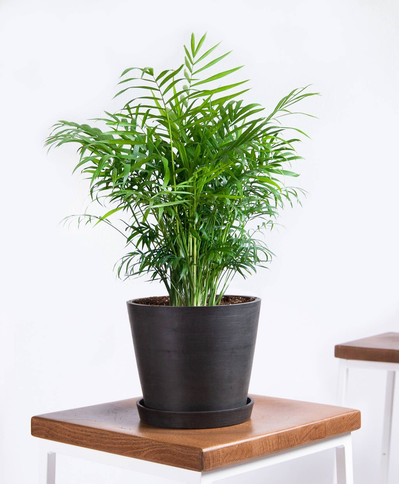Picture of: 20 Best Tall Indoor Plants Best Indoor Trees For Your Home