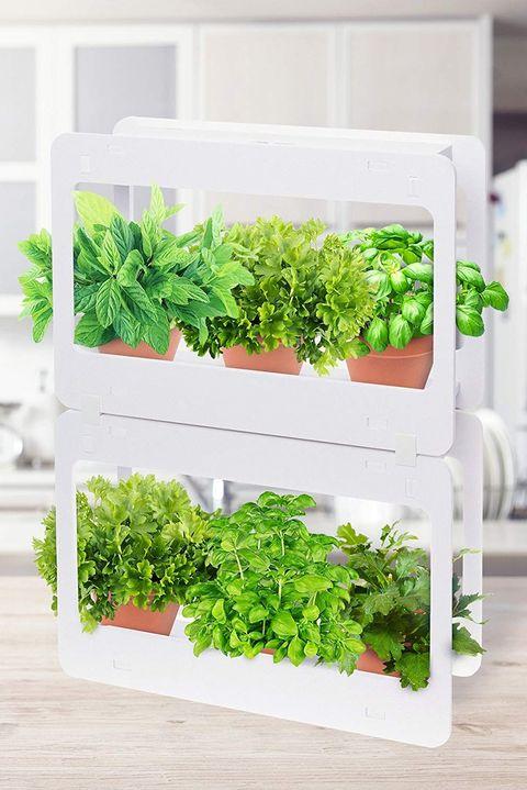 17 Indoor Herb Garden Ideas 2021, Countertop Herb Garden