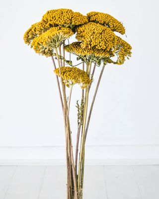 Dried Flowers Where To Buy Best Varieties And Arrangement Tips